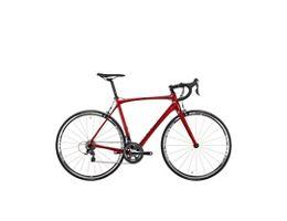 Orro Gold Road Bike Tiagra - 2021